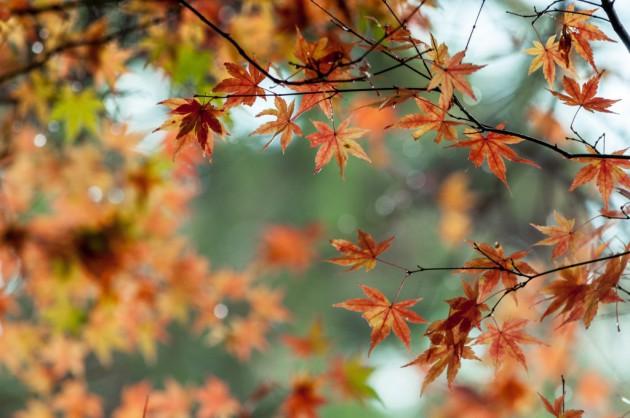 www-pakutaso-com-shared-img-thumb-ell88_irodukumomiji20141127093801